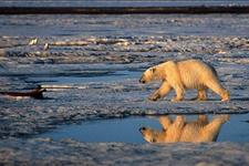 Cuddly Symbols Not Cooperating in Climate Panic - Mona Charen - Townhall Conservative Columnists